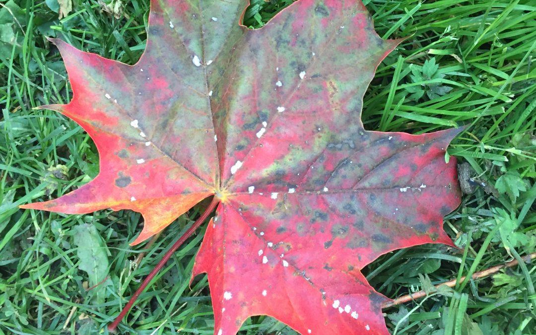 Høsten er metallelementets tid