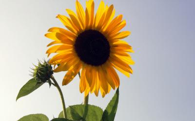 8 tips i sommervarmen