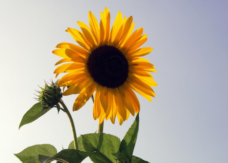8 tips i sommervarmen – ta vare på Yin!