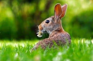 Harens måned – mars